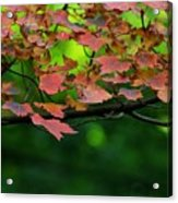 Laid Upon The Branches Acrylic Print