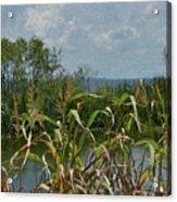 Lake Apopka Acrylic Print