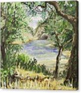 Lake At St Remy Acrylic Print