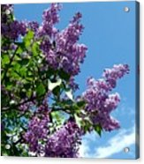Lake Country Lilacs Acrylic Print