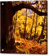 Lake District - Fall Colors Near Aira Force Acrylic Print