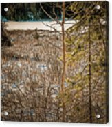 Lake Edge Acrylic Print