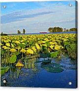 Pointe Mouilee Lake Erie Acrylic Print