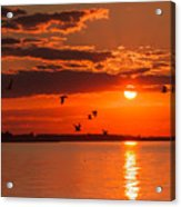 Lake Erie Sunset 7999 Acrylic Print