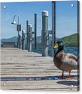 Lake George Duck Acrylic Print
