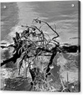 Lake Irene 12-4 Acrylic Print