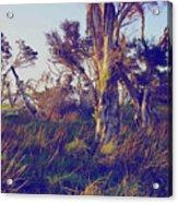 Lake Leschenautia Acrylic Print