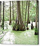 Lake Martin Swamp Acrylic Print