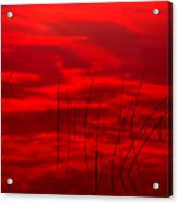 Lake Reeds And Red Sunset Acrylic Print