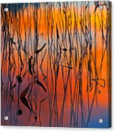 Lake Reeds And Sunset Colors Acrylic Print