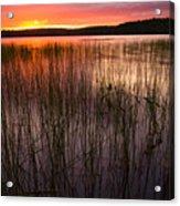 Lake Reeds At Sundown Acrylic Print
