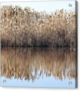 Lake Reflexion Acrylic Print