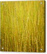 Lake Tahoe Wild Grasses Acrylic Print