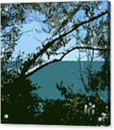 Lake Through The Trees Acrylic Print by Michelle Calkins