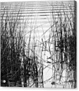 Lake Wake Acrylic Print