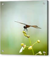 Lakes Park Butterfly Garden Acrylic Print