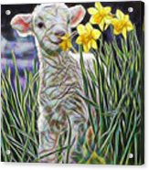 Lamb Collection Acrylic Print