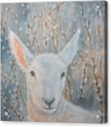 Lamb In The Willows Acrylic Print