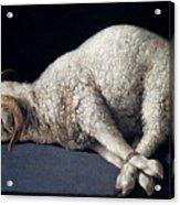 Lamb Of God. Agnus Dei Acrylic Print