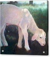 Lamb Of God Acrylic Print