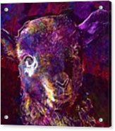 Lamb Spring Cute Animal  Acrylic Print