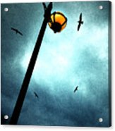 Lamps With Birds Acrylic Print by Meirion Matthias