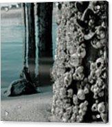 Land Meets Water Nature Photograph Acrylic Print