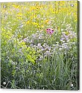 Land Of Flowers Acrylic Print
