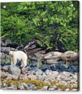 Land Of The Spirit Bear Acrylic Print