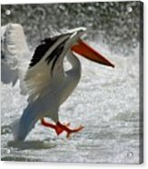 Landing Acrylic Print by Janet Moss