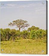 Landscape In Botswana Acrylic Print