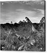 Landscape In Contrast Acrylic Print