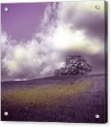 Landscape In Purple And Gold Acrylic Print