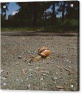 Landscape Of The Snail Acrylic Print