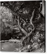 Landscape - The Forbidden Forest Acrylic Print