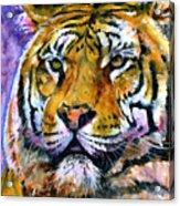 Landscape Tiger Acrylic Print