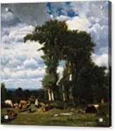 Landscape With Cattle At Limousin Acrylic Print