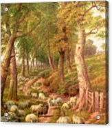 Landscape With Sheep Acrylic Print by Charles Joseph