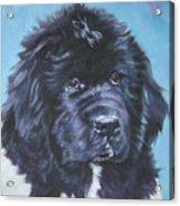 Landseer Newfoundland Puppy Acrylic Print