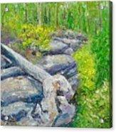 Lane Cove Burnt Stump Acrylic Print