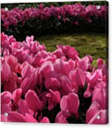 Lane Of Pink Acrylic Print
