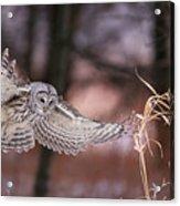 L'ange De La Mort Acrylic Print