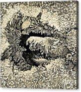 Langleys Sunspot Observation, 1873 Acrylic Print