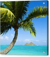 Lanikai Palm Acrylic Print