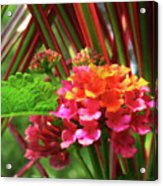 Lantana And Stripes Acrylic Print