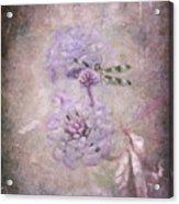 Lantana In Purple Acrylic Print