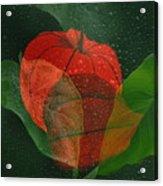 Lantern Flower Acrylic Print