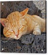 Lanzarote Ginger Acrylic Print