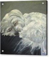 Lap Dog Acrylic Print