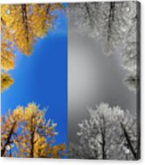 Larches Color To Black And White Reflection Acrylic Print